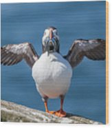 Puffin With Fish For Tea Wood Print