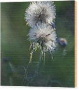 Puffs 1664-111417-1cr Wood Print