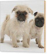 Pugzu And Pug Puppies Wood Print