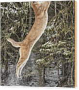 Puma High Jump Wood Print