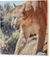 Puma Mountain Lion Nature Wear Wood Print