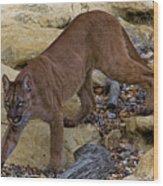 Puma Stalking Wood Print