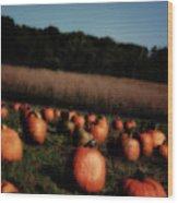 Pumpkin Field Shadows Wood Print