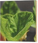 Pumpkin Leaf 2 Wood Print