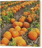 Pumpkin Patch Wood Print