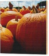 Pumpkin Patch Piles Wood Print
