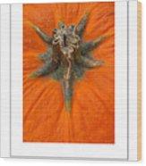Pumpkin Stem Poster Wood Print