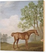 Pumpkin With A Stable-lad Wood Print by George Stubbs
