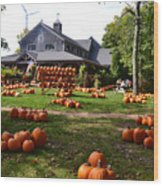 Pumpkins In Martha's Vineyard Farm Wood Print