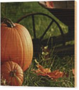 Pumpkins In The Grass Wood Print by Sandra Cunningham