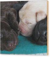 Puppies Dreams 2 Wood Print