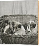 Puppies Of The Past Wood Print