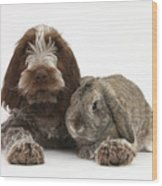 Puppy And Rabbt Wood Print