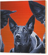 Puppy Dog Panoramic Montage Wood Print