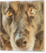 Puppy Eyes Wood Print