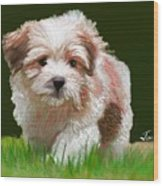 Puppy In High Grass Wood Print