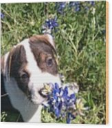 Puppy In The Blubonnets Wood Print