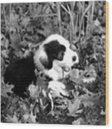 Puppy In The Leaves Wood Print