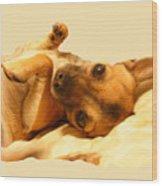 Puppy Love Wood Print by Amanda Vouglas