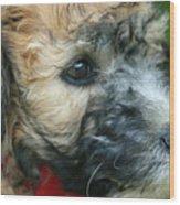 Puppy Love I Wood Print