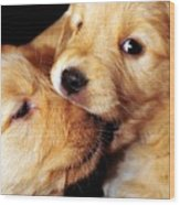Puppy Love Wood Print by Laura Mountainspring