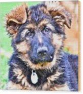 Puppy Oskar 2 Wood Print