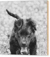 Puppy Play Wood Print