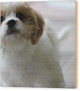 Puppy Sunshine Wood Print