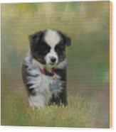 Puppyhood 1 Wood Print