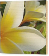 Pure Beauty Plumeria Flowers Wood Print