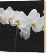 Pure Orchid Wood Print