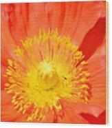 Pure Poppy Sunshine Wood Print