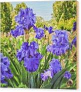 Pure Sapphire Iris Wood Print