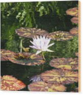Pure Water Lily Wood Print