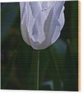 Pure White Petals Wood Print