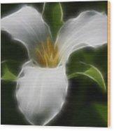 Pure White Trillium Wood Print