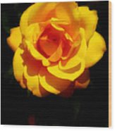 Pure Yellow Petals Wood Print