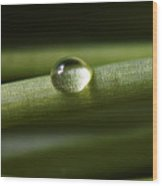 Purity Of A Raindrop Wood Print