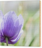 Purple Anemore Flower Wood Print
