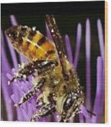 Purpel Nectar Wood Print