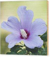 Purple Althea Wood Print