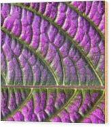 Purple And Green Leaf Wood Print