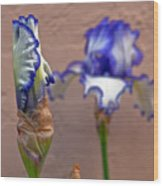 Purple And White Bearded Iris Bud Wood Print