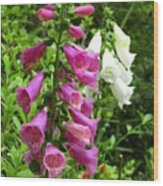 Purple And White Bell Flowers Wood Print