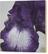 Purple And White Iris Bloom Wood Print