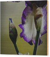 Purple And White Iris Flower Wood Print
