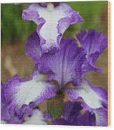 Purple And White Iris Layers Wood Print