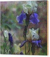Purple And White Irises 6647 Dp_2 Wood Print