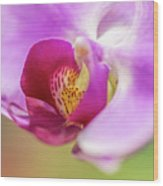 Purple And White Orchid 2 Wood Print