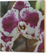 Purple And White Orchid Wood Print